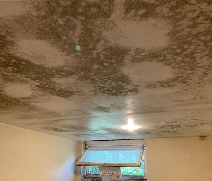 large mold stains on a ceiling