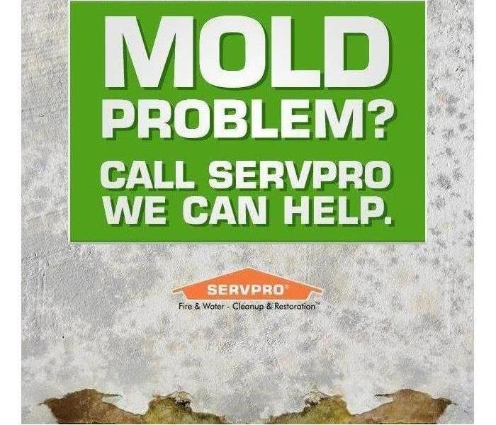 We Know Mold