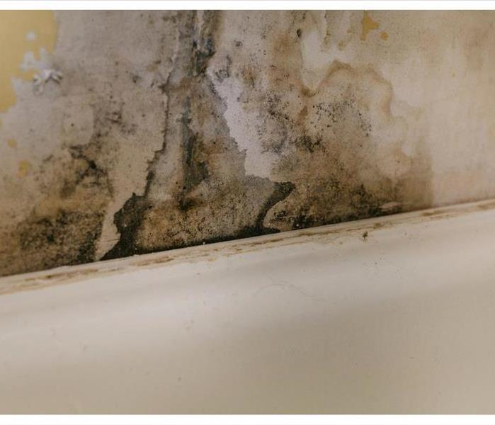 Old wall covered with mold due to humidity